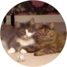 KRGcirclecats