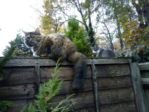 catsonfence